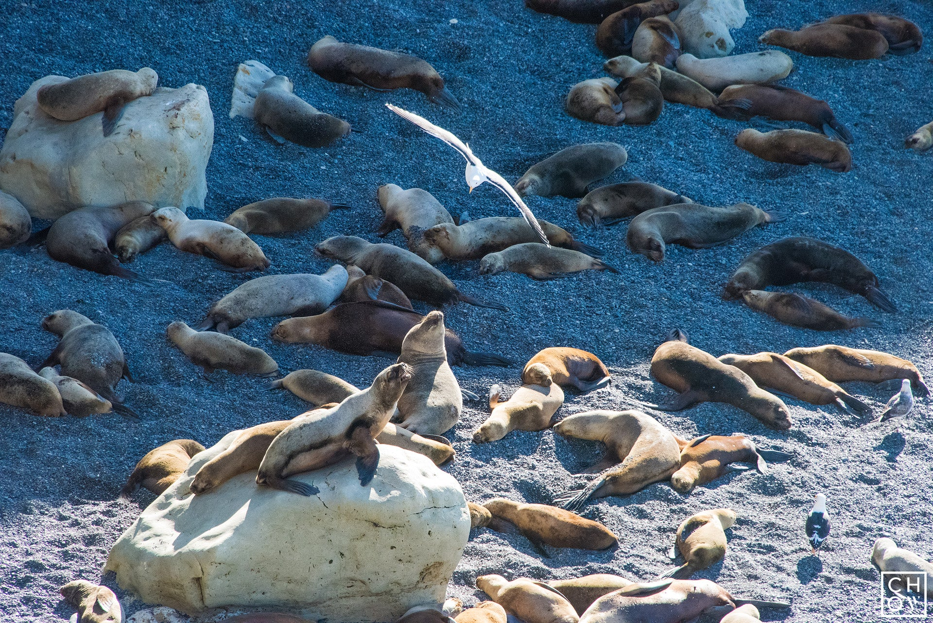 Sea Lion Colony of Punta Lomo, Argentina