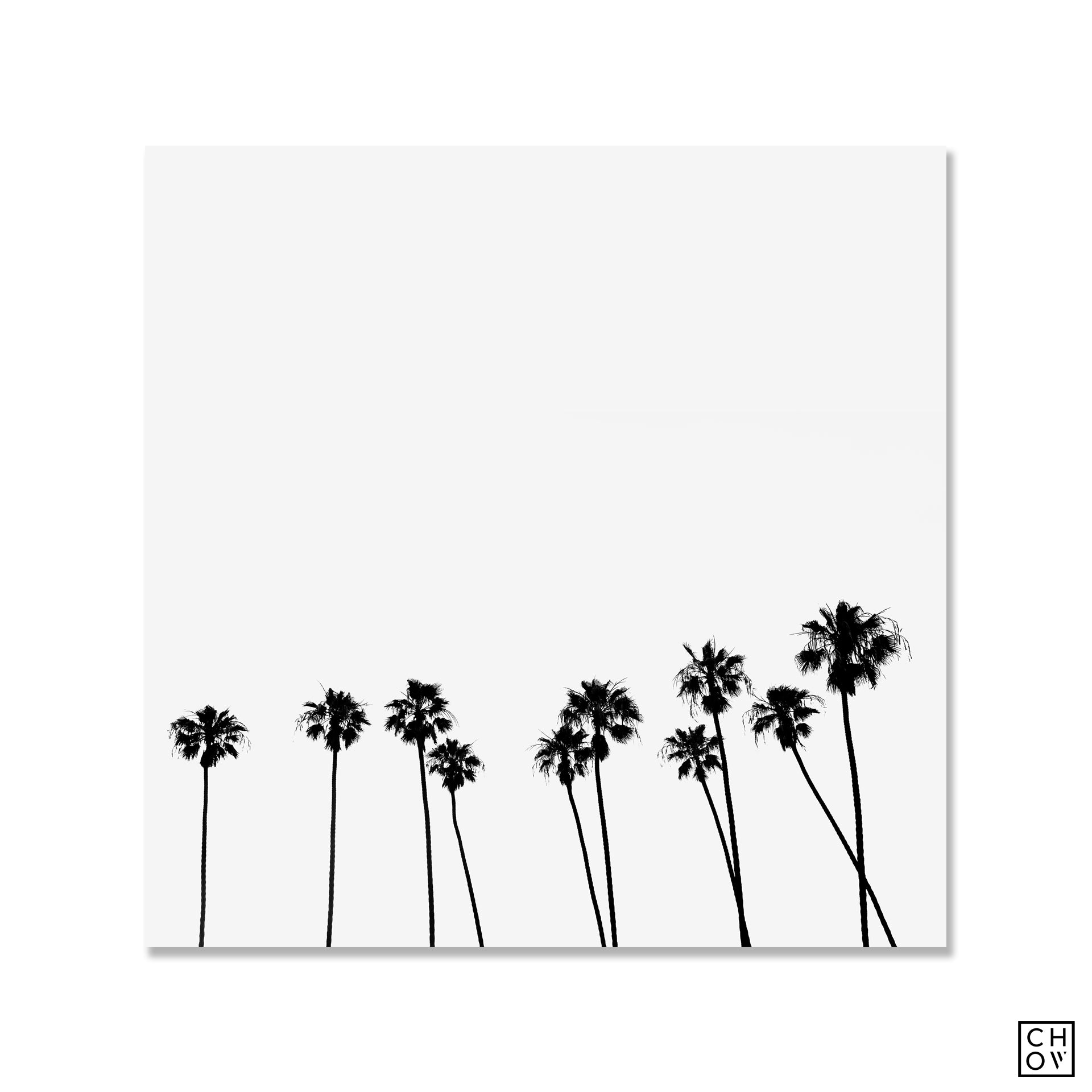 Palms // California