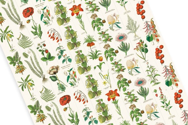 Pepin Label and Sticker Book: Flora