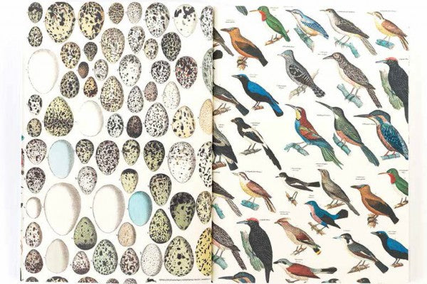 Pepin Gift & Creative Papers: Fauna