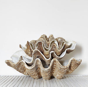 Polyresin Clam Shells - Nolan & Co