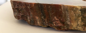 Petrified Wood Slice (B) - Nolan & Co