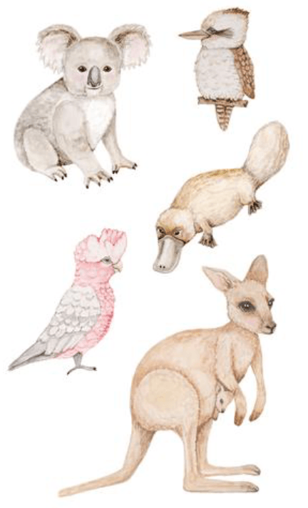 Fauna- Australian Animals- Fabric Wall Stickers - Sailah Lane
