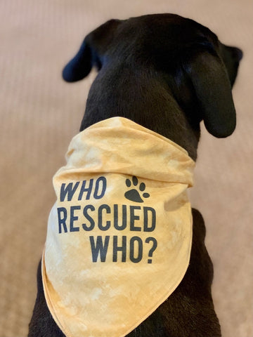 Dog Bandana Who Rescued Who Yellow