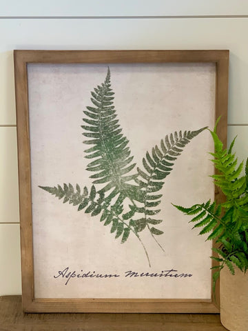 Forest Glen Fern Framed Print 1 of 3