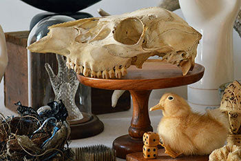 A sheep's skull atop of a wooden pedestal, surrounded by creepy decorative items like a taxidermy duckling.