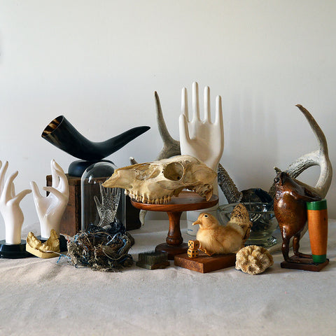 An assortment of spooky home decor including skulls, horns, antlers & taxidermy.