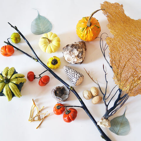 A flat lay assortment of natural items such as dried sea coral, bones, seashells, small tomatoes on the vine and gourds.