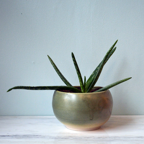 aloe plant in green stoneware planter - You & Yours Fine Vintage