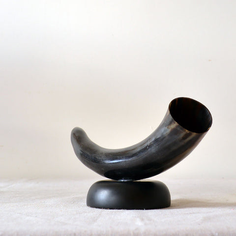 mounted buffalo horn