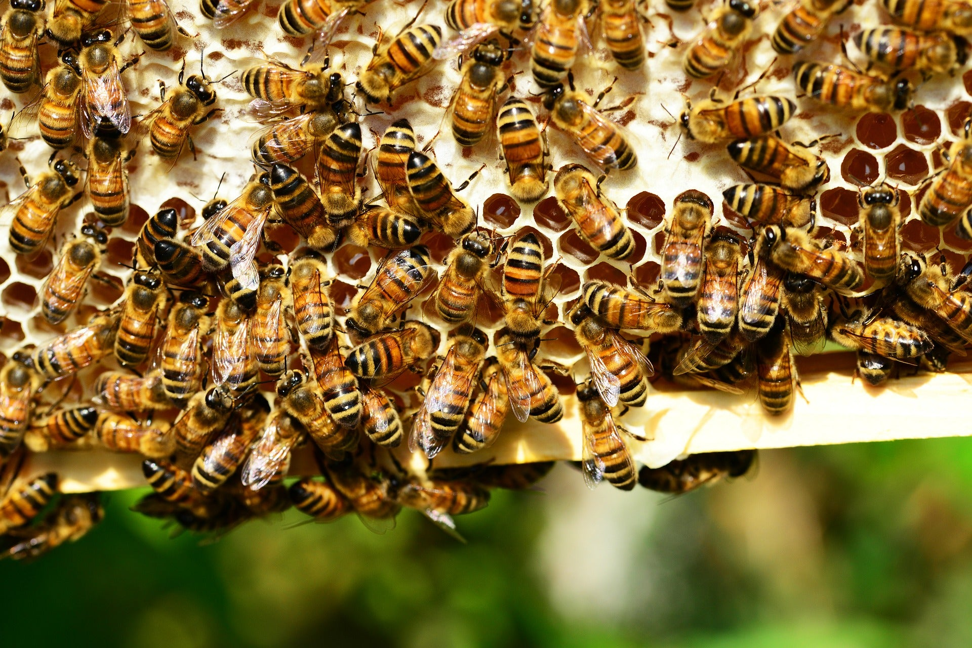 Facts about Honey bees