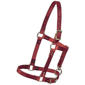 Halter Leather Yearling - EZhorse.com