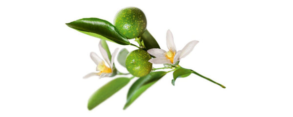 What Are The Skin Benefits Of Kakadu Plum?