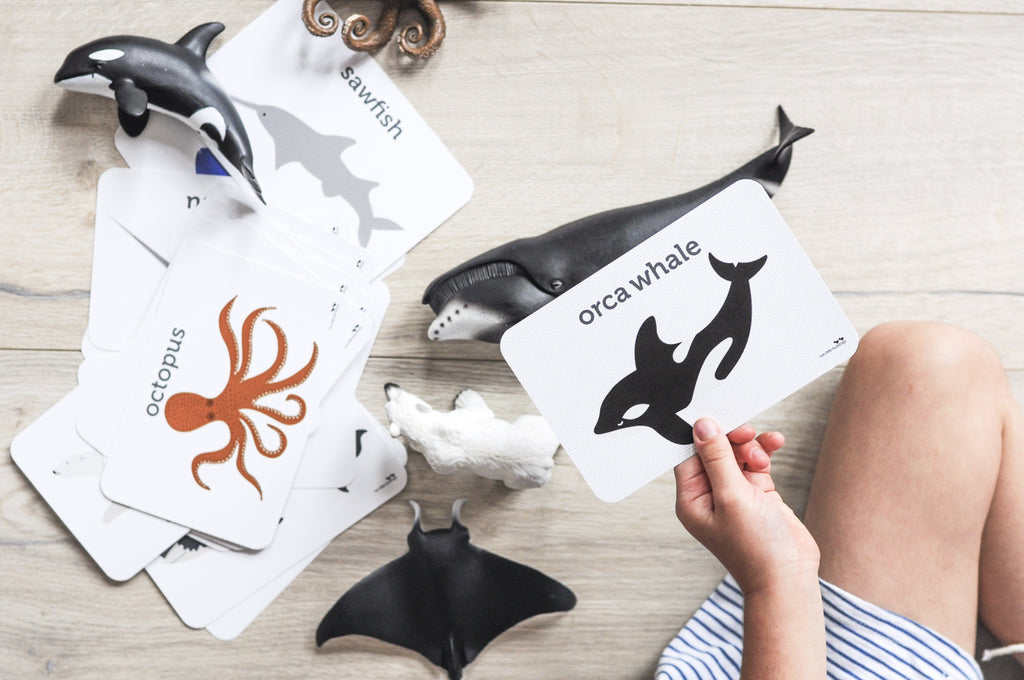LOVE THIS! Flash Cards  - Sea Life from Two Little Ducklings - shop at littlewhimsy NZ