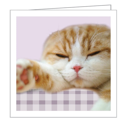 Green Notes Gift Cards Pack - Waffles the Cat