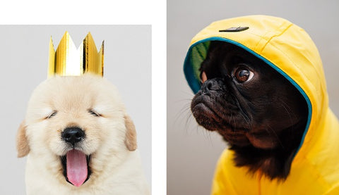THIS BOOK IS LITERALLY JUST PICTURES OF CUTE ANIMALS THAT WILL MAKE YOU FEEL BETTER  (HB)
