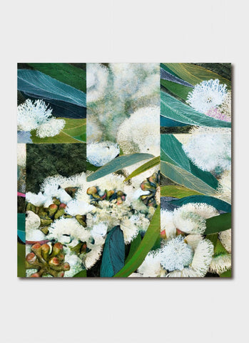 Padma art card - Flowering Snow Gum