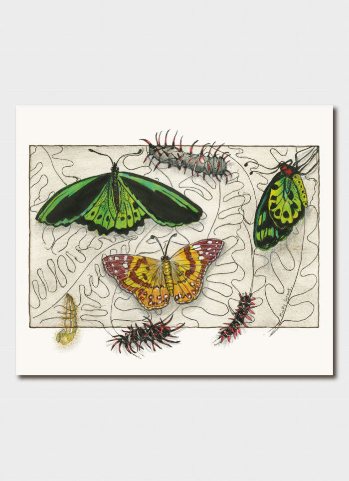 Minky Grant art card - Painted Lady Butterfly & Bird Wing Butterfly