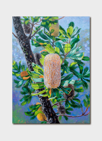 Fiona Craig Art Card - Blue Mountains Banksias