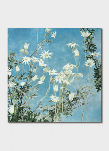 Cressida Campbell Card Pack - Flannel Flowers Night and Day