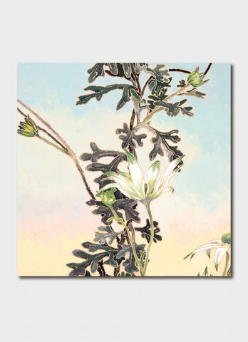 Cressida Campbell Card Pack - Flannel Flowers Darkness and Light