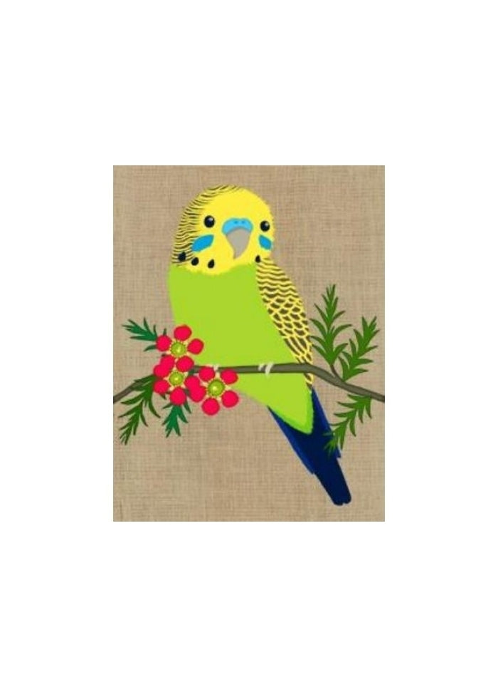 Gillian Mary - Budgerigar