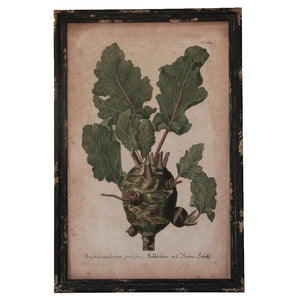 Framed print Leafy vegetable - adorned-interiors