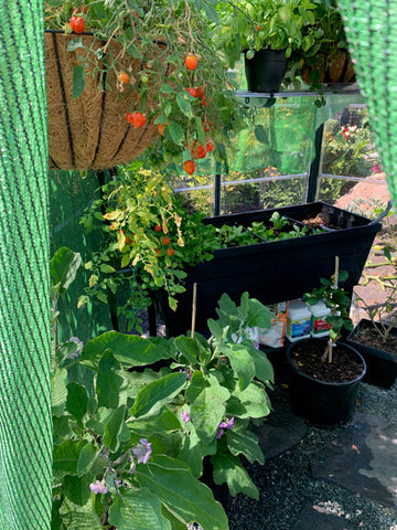 hanging tomatoes, eggplants, herbs, lettuce, kale in pots