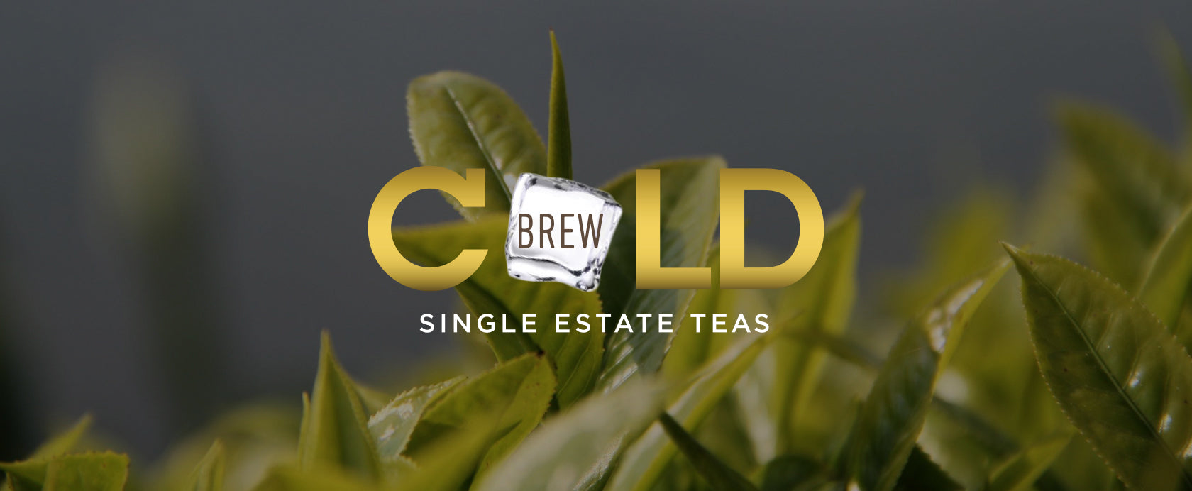 Cold Brew Tea Banner