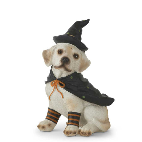 Dog in Witches Hat & Cape