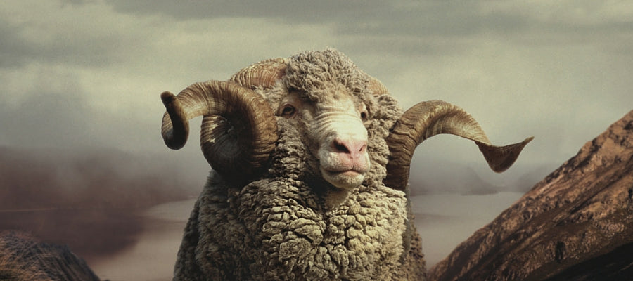 The Ultimate Guide to Merino Wool – Everything You Need To Know (WoolLand Norway Blog)
