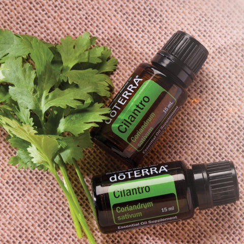 Essential Oil - Cilantro ( Coriandrum sativum )