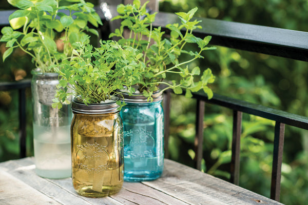 Transplanting Herbs into your Modern Sprout self-watering planters