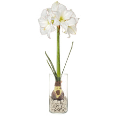 Winter Bulb Kit - Amaryllis