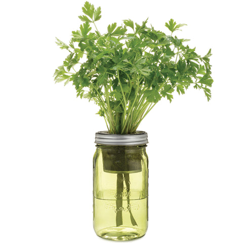 Garden Jar - Organic Parsley