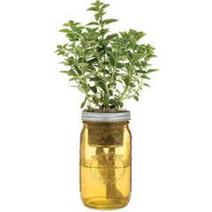 Garden Jar - Greek Oregano
