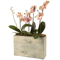 3 pot hydro planter - weathered grey