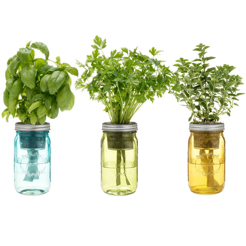 Garden Jar Three Pack: Italian