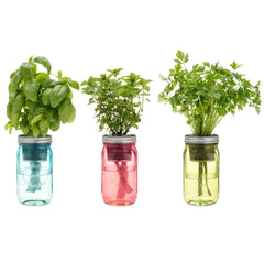 OPRAH'S PICK: Garden Jar 3PK - Basil, Parsley & Mint