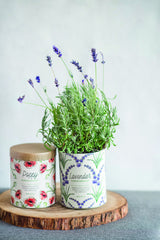 Waxed Planter - Lavender Grow Kit