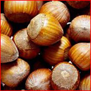 Nuts In The Shell: Filberts (Hazelnuts)