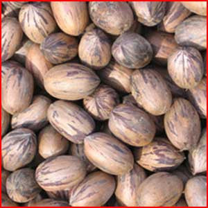Nuts In The Shell: Pecans