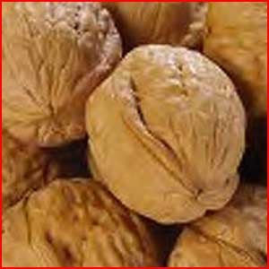 Nuts In The Shell: English Walnuts