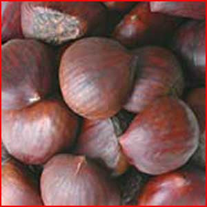 Nuts In The Shell: Chestnuts