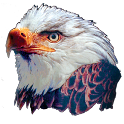 """3D BALD EAGLE"" 3D ART by AWD. <font face=""Times New Roman""><i> 11023TD2 </i></font>"