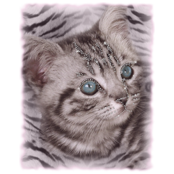 """LARGE KITTEN"" COMBO RH - RHINESTONE TRANSFER by AWD. <font face=""Times New Roman""><i> 19497HLR0 </i></font>"