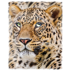 """LARGE LEOPARD"" COMBO RH - RHINESTONE TRANSFER by AWD. <font face=""Times New Roman""><i> 19498HLR0 </i></font>"