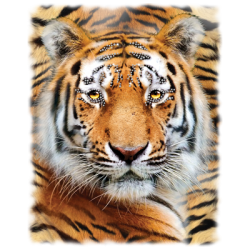 """LARGE TIGER"" COMBO RH - RHINESTONE TRANSFER by AWD. <font face=""Times New Roman""><i> 19499HLR0 </i></font>"