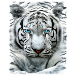 """LARGE WHITE TIGER"" COMBO RH - RHINESTONE TRANSFER by AWD. <font face=""Times New Roman""><i> 19500HLR0 </i></font>"