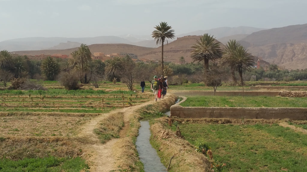 The Crops of Morocco